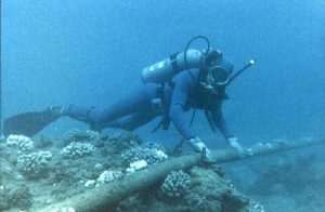 "Diver Checking Underwater Protection of Cable - <a href=""https://commons.wikimedia.org/wiki/File:Diver_Checking_Underwater_Protection_of_Cable_-_Flickr_-_The_Official_CTBTO_Photostream.jpg"">Wikimedia Commons</a>"