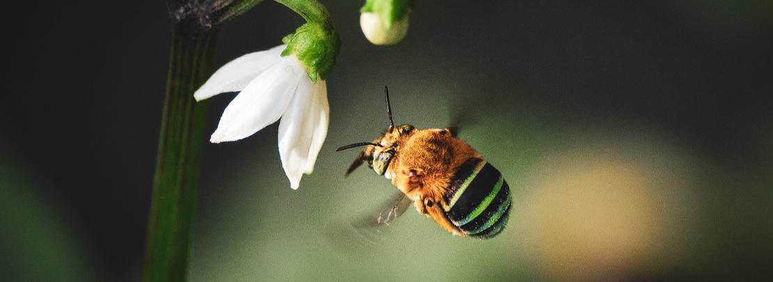 A tale of two honeypots in Bhutan