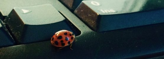 An image of a bug on a keyboard
